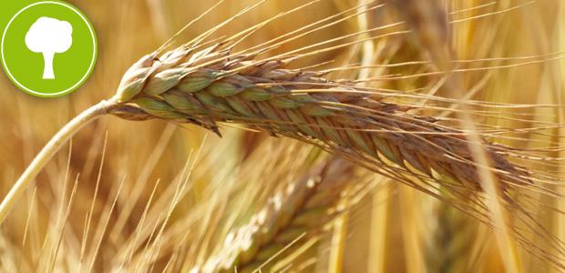 LINEA-BIO-BIOLOGIO-agricoltura-biologica-molino-borgo