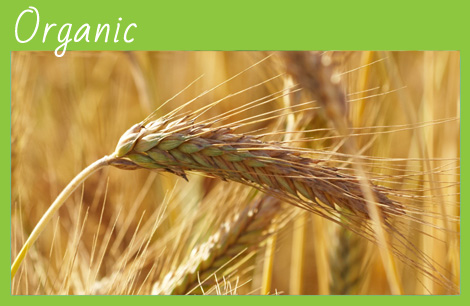 organic wheat flour, organic polenta, organic corn flour